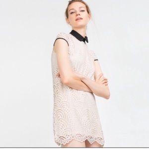 ZARA COLLECTION Cream Lace Poplin Collar Dress